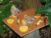 Бизнес под ключ с рентабелностью 500% Ферма Живых Тропических Бабочек